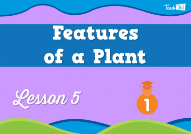 Features of a Plant