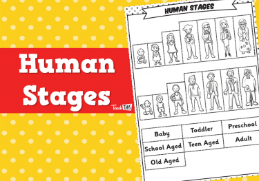 Human Stages - Worksheet